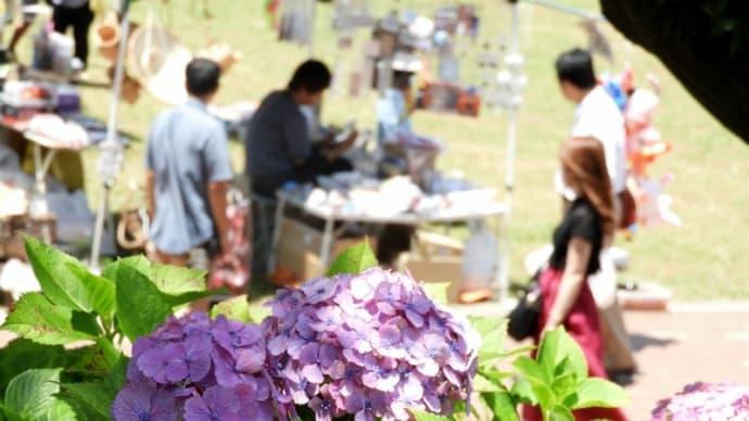 高塔山の紫陽花