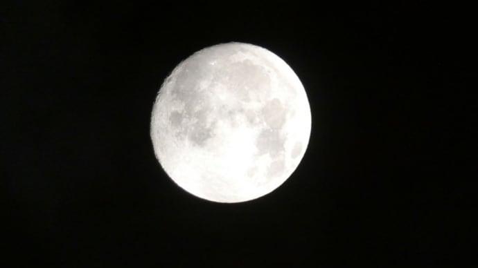 満月前夜のお月様。