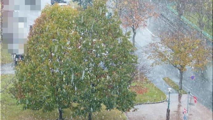 雪です !