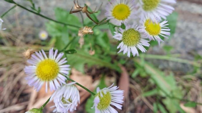 地味な花たち