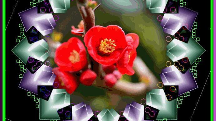 画像ジェイトリム枠・花写真のコンポート