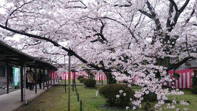 工場内で観桜会
