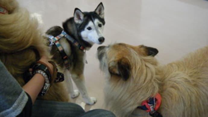 狂犬病予防接種&フィラリア