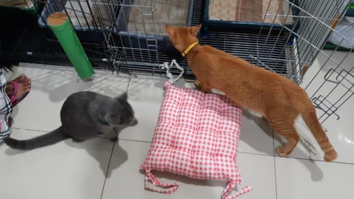 猫達の新しい寝場所