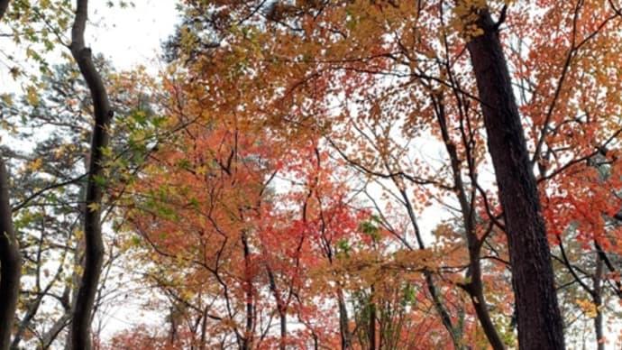 松雲山荘の紅葉