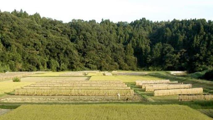 里の秋<稲架>