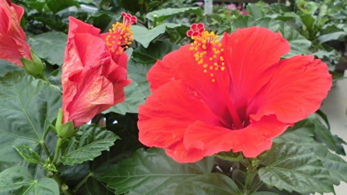 街角に咲く花✿街角ぶらり旅08-03