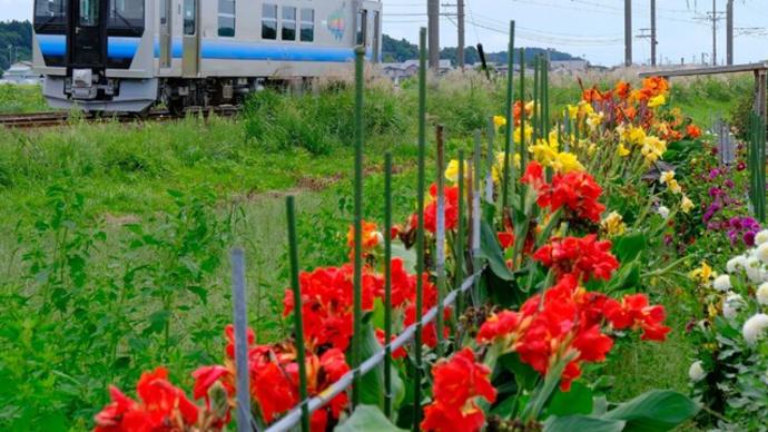 夏の花が見送る