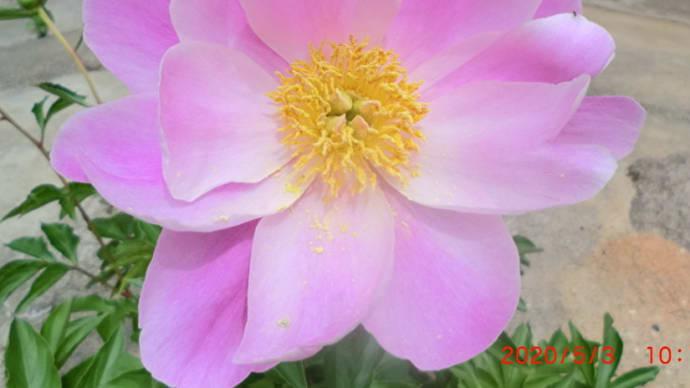 庭に咲く花📷お家で楽しもう!05-03