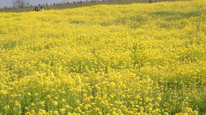 黄色いジュータン