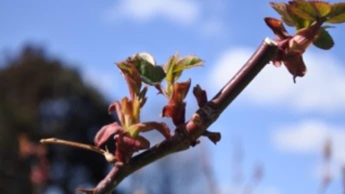 春の嵐と不調