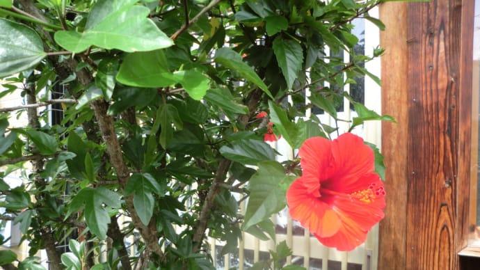 街角に咲く花✿街角ぶらり旅07-27