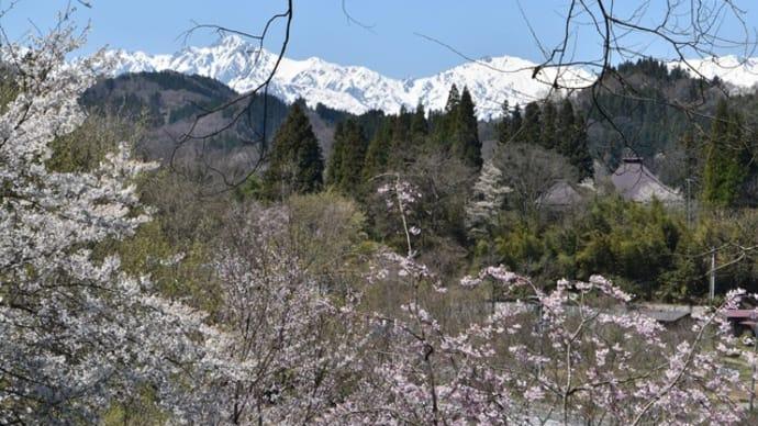 春の北アルプスを眺めに!