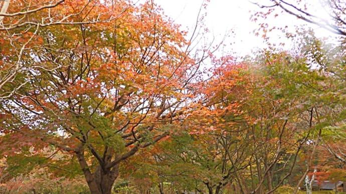 11/28_やっと本格的な紅葉