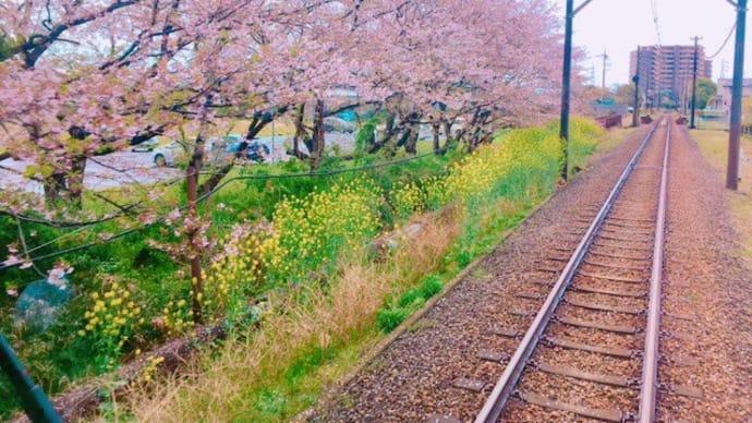 岳南電車公式「岳南電車でお花見!2019」