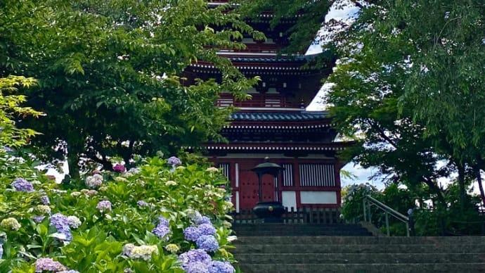 本土寺で、紫陽花と菖蒲