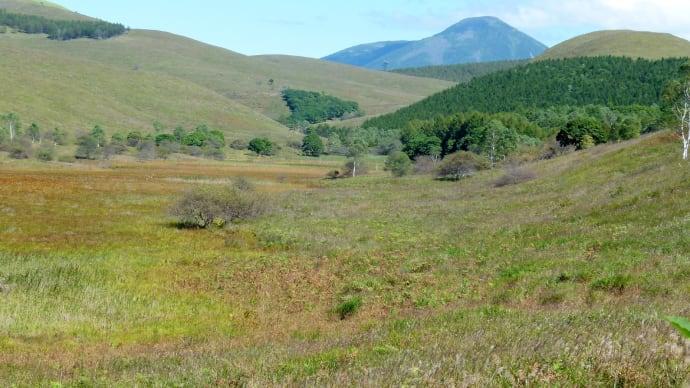 初秋の霧ケ峰・・・・・・踊場湿原から・・・蓼科山、蛙原を見上げる