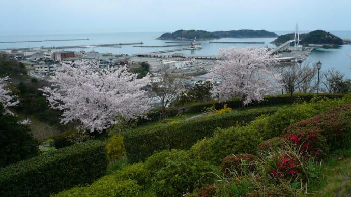 あちらこちらで、桜が満開