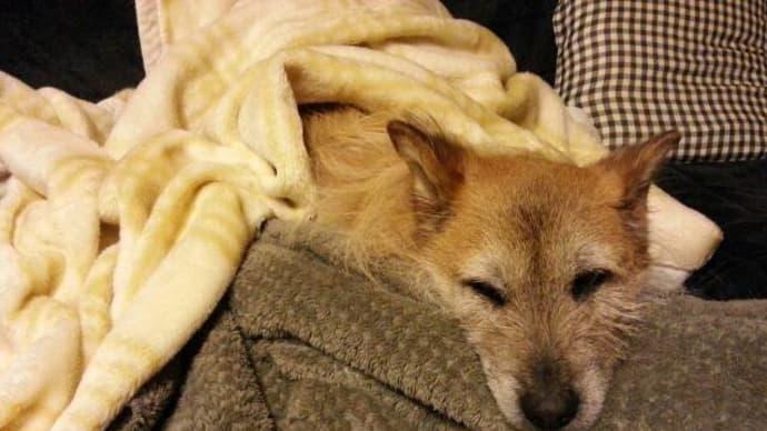 毛布を枕にするユノ
