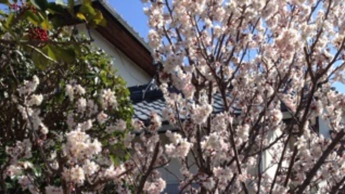 春いろいろ