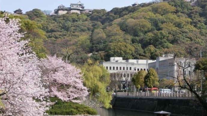 松山城の桜も満開でした~♪