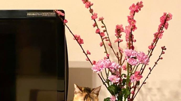 花咲かニャンコ