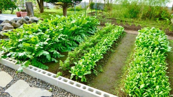 秋分の日における我が家の猫額菜園の作柄報告