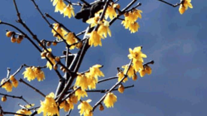 「『立春』は過ぎたけど…」。「見れば げに 心もそれになりぞゆく…『水になる』」。