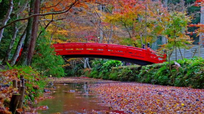 小國神社 雨の紅葉