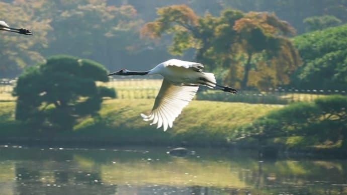 野鳥を撮る!おすすめブログとコツをご紹介!