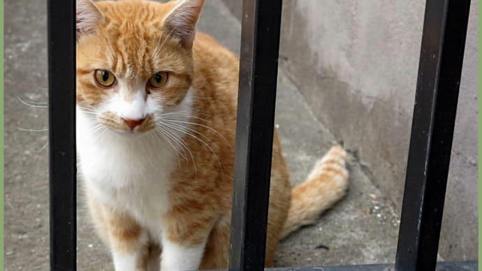 四天王寺の近くで、タッタッタと寄って来た猫