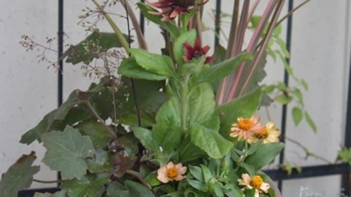 夏用の寄せ植え&玄関周りの様子