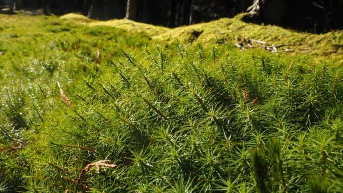 苔とレンゲ