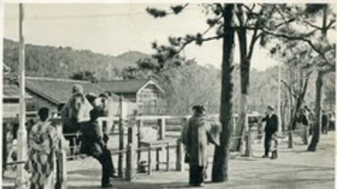 お正月と観光~動物園~