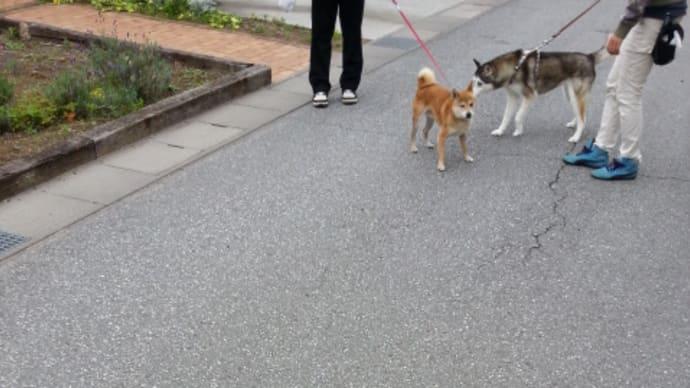 散歩中につき君と遭遇