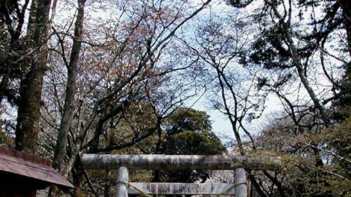 名勝「桜川」-國指定天然記念物-