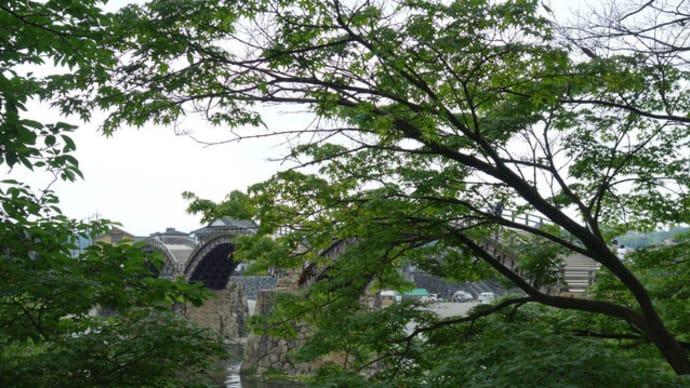 錦帯橋と吉香公園の花菖蒲