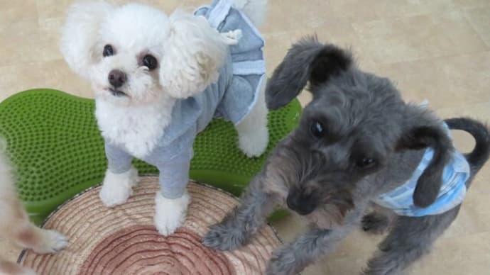 12月13日(日)の【パピーパーティー】は予定通り開催いたします。  犬のしつけ教室@アロハドギー