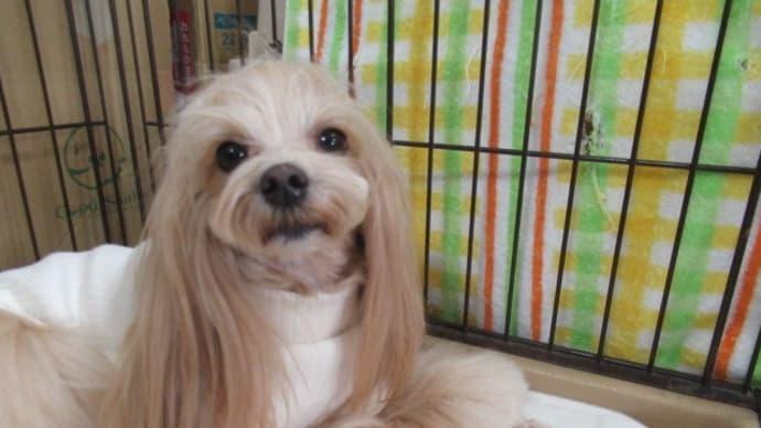 20/03/24 犬の幼稚園BuddyDog