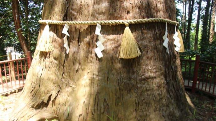 成田 麻賀多神社 大杉 樹齢千三百有余年