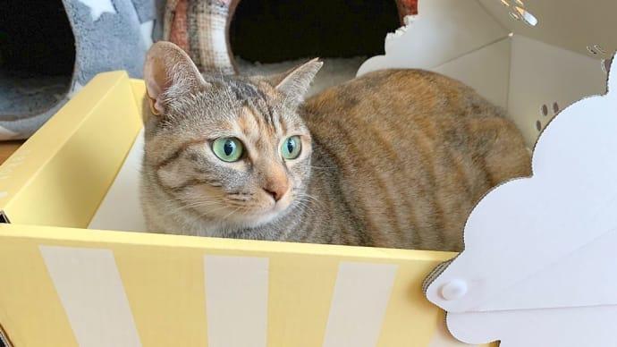 箱入りネコ様