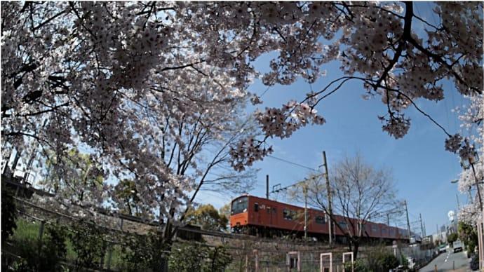 桜咲く、 桜島線(JRゆめ咲線)