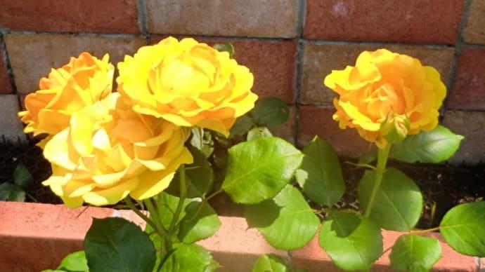 街角に咲く花📷街角ぶらり旅06-01