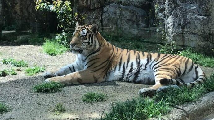 日本平動物園に行きました