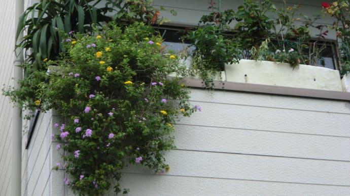 2階から花たちが『こんにちは』と挨拶しているようです📷街角ぶらり旅
