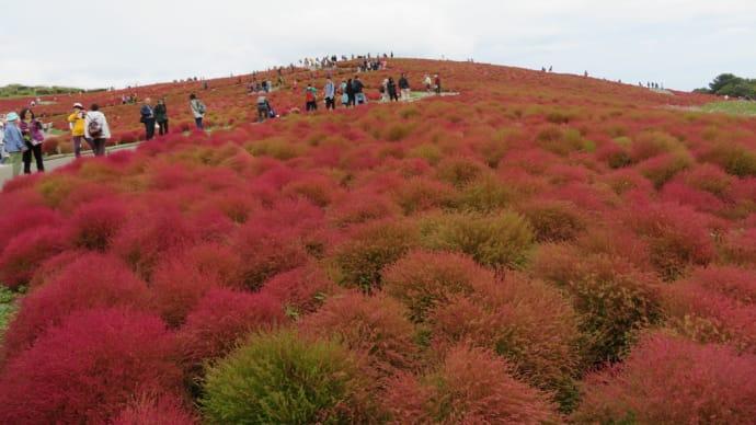 ひたち海浜公園(コキア)&鹿島神宮