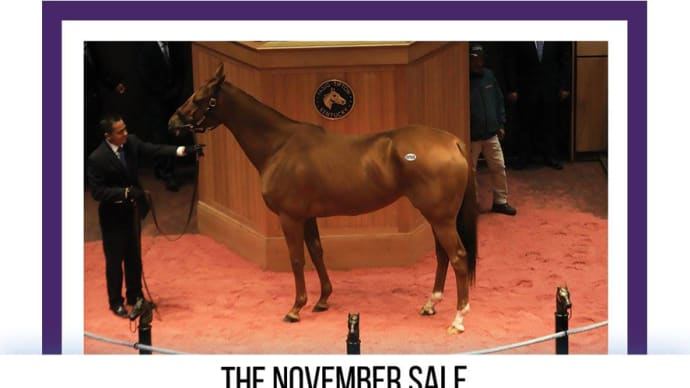 【2019 Fasig-Tipton The November Sale】が開催!(最高額馬はBLUE PRIZE)