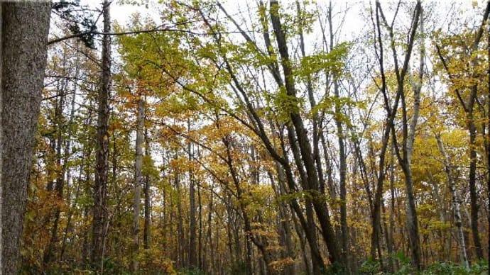 今日の森で