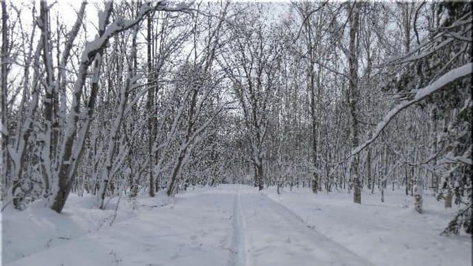 今日の森は・・・