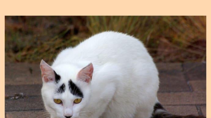 TVで見た猫のはっちゃんに似てる?
